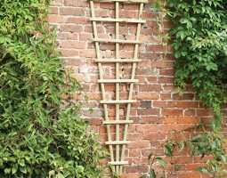 Decorative Trellis on a Wall