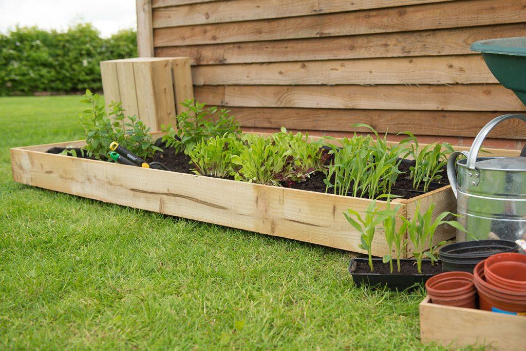 Standard Raised Bed Forest Garden