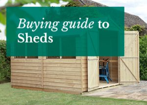 Shed in Garden